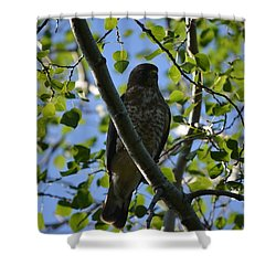 Shower Curtain featuring the photograph Broad-winged Hawk by James Petersen