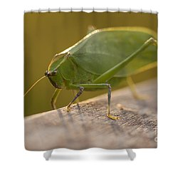 Broad-winged Katydid Shower Curtain