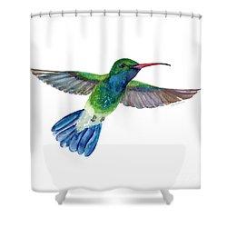 Broadbilled Fan Tail Hummingbird Shower Curtain