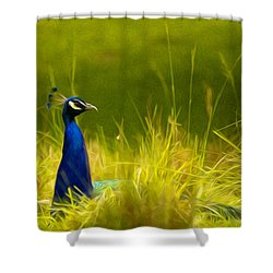 Bronx Zoo Peacock Shower Curtain
