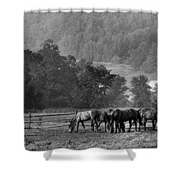 Shower Curtain featuring the photograph Broodmares by Joan Davis
