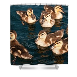 Shower Curtain featuring the photograph Brothers And Sisters by Brenda Jacobs