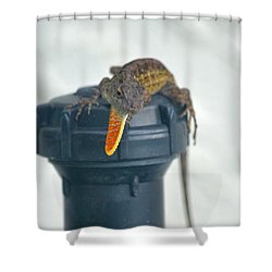 Brown Anole With Dewlap Shower Curtain by Richard Bryce and Family