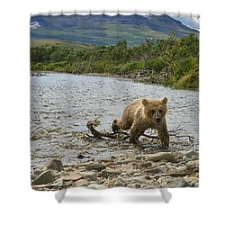Brown Bear Cub Walking Up Stream Trying Keep Up With Mom Shower Curtain by Dan Friend