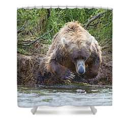 Brown Bear Diving Into The Water After The Salmon Shower Curtain by Dan Friend