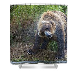 Brown Bear Shaking Water Off After An Unsucessful Salmon Dive Shower Curtain by Dan Friend