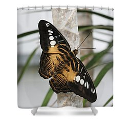 Brown Clipper Butterfly #2 Shower Curtain by Judy Whitton