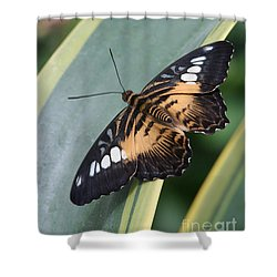 Brown Clipper Butterfly #4 Shower Curtain