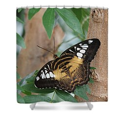 Brown Clipper Butterfly #5 Shower Curtain by Judy Whitton