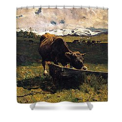 Brown Cow At Trough  Shower Curtain by Giovanni Segantini