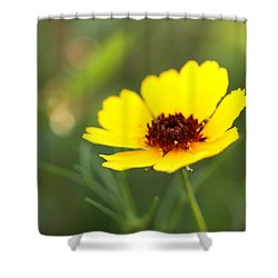 Brown Eyed Susan Shower Curtain