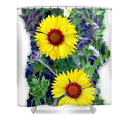 Brown- Eyed Susans Shower Curtain by Will Borden