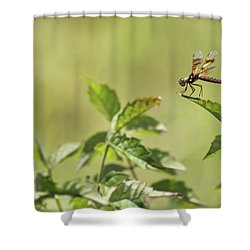 Brown Hawker Dragonfly Shower Curtain by Jason Politte