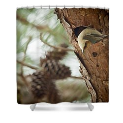 Brown Headed Nuthatch Shower Curtain by Linda Unger