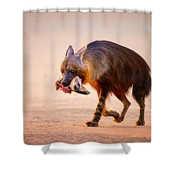 Brown Hyena With Bat-eared Fox In Jaws Shower Curtain