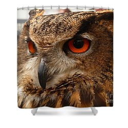 Shower Curtain featuring the photograph Brown Owl by Vicki Spindler