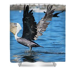 Brown Pelican Landing Shower Curtain