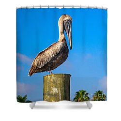 Brown Pelican - Pelecanus Occidentalis Shower Curtain by Carsten Reisinger