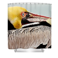 Brown Pelican Profile Shower Curtain