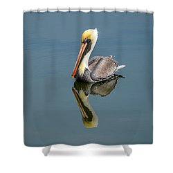 Brown Pelican Reflection Shower Curtain