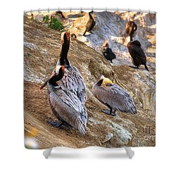 Shower Curtain featuring the photograph Brown Pelicans At Rest by Jim Carrell
