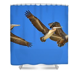 Shower Curtain featuring the photograph Brown Pelicans In Flight by Debra Martz