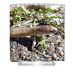 Brown Snake Shower Curtain