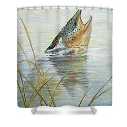 Brown Takes Damsel  Shower Curtain by Rob Corsetti