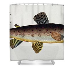 Brown Trout Shower Curtain by Andreas Ludwig Kruger