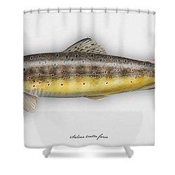 Brown Trout - Salmo Trutta Morpha Fario - Salmo Trutta Fario - Game Fish - Flyfishing Shower Curtain