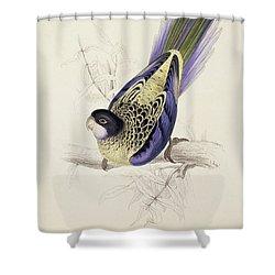 Browns Parakeet Shower Curtain