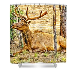 Browsing Elk In The Grand Canyon Shower Curtain by Bob and Nadine Johnston