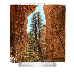 Bryce Canyon Trees Shower Curtain by Tammy Wetzel