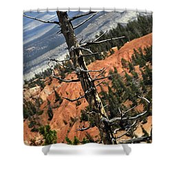Bryce Tree Shower Curtain