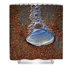 Bubble Shell Shower Curtain