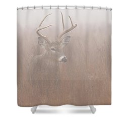 Buck In Fog Shower Curtain by Rob Graham