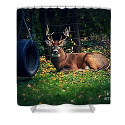 Buck In The Back Yard Shower Curtain