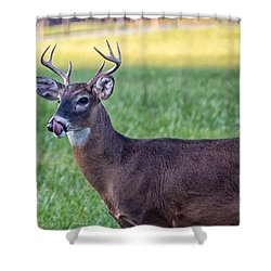 Buck Licking His Chops At Cades Cove Inside Of The Great Smoky Mountains National Park Shower Curtain