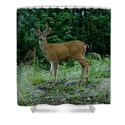 Shower Curtain featuring the photograph Buck by Rod Wiens