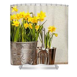 Buckets Of Daffodils Shower Curtain by Amanda Elwell