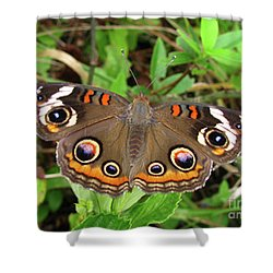 Shower Curtain featuring the photograph Buckeye Butterfly by Donna Brown