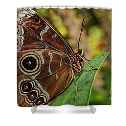Shower Curtain featuring the photograph Blue Morpho Butterfly by Olga Hamilton