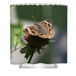 Shower Curtain featuring the photograph Buckeye by Karen Silvestri