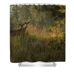 Bucks In Velvet Shower Curtain