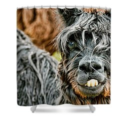 Bucky The Alpaca Shower Curtain