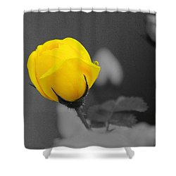 Bud - A Splash Of Yellow Shower Curtain by John  Greaves