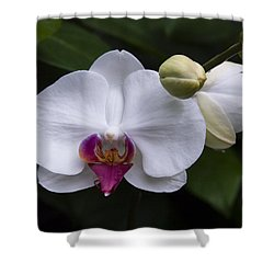 Bud And Bloom II Shower Curtain by Penny Lisowski