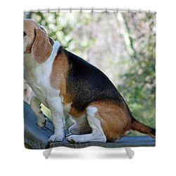 Buddy Shower Curtain by Lisa Phillips