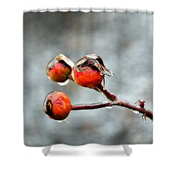 Buds On Ice Shower Curtain