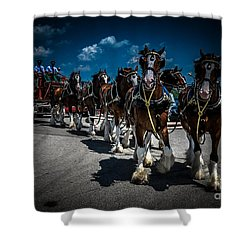 Budweiser Clydesdales Shower Curtain